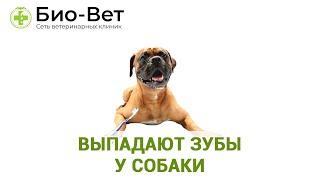 Выпадают зубы у собаки.  Ветеринарная клиника Био-Вет.