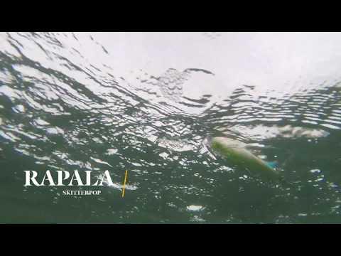 How Lures Swim: Rapala Skitterpop