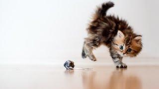 Супер кот/Смешное видео про котов 2016 #4/FUNNY CATS 2016