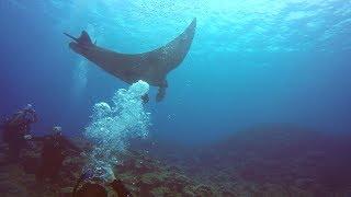 Scuba Diving in Japan | Ishigaki Island