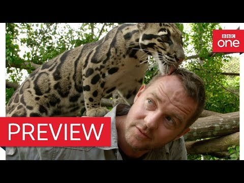 Presenter speaks to leopard - Ingenious Animals: Episode 2 Preview - BBC One