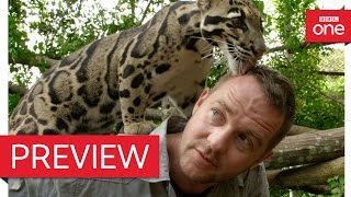 Presenter speaks to leopard - Ingenious Animals: Episode 2 Preview - BBC One