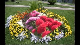 Как оформить клумбу, сажая бархатцы(Бархатцы - солнечный цветок,названы в честь персонажа греческой мифологии, внука бога Юпитера — Тагетеса..., 2015-02-26T19:45:51.000Z)
