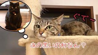 新猫登場のストレスで先住猫が体調を壊してしまいました…