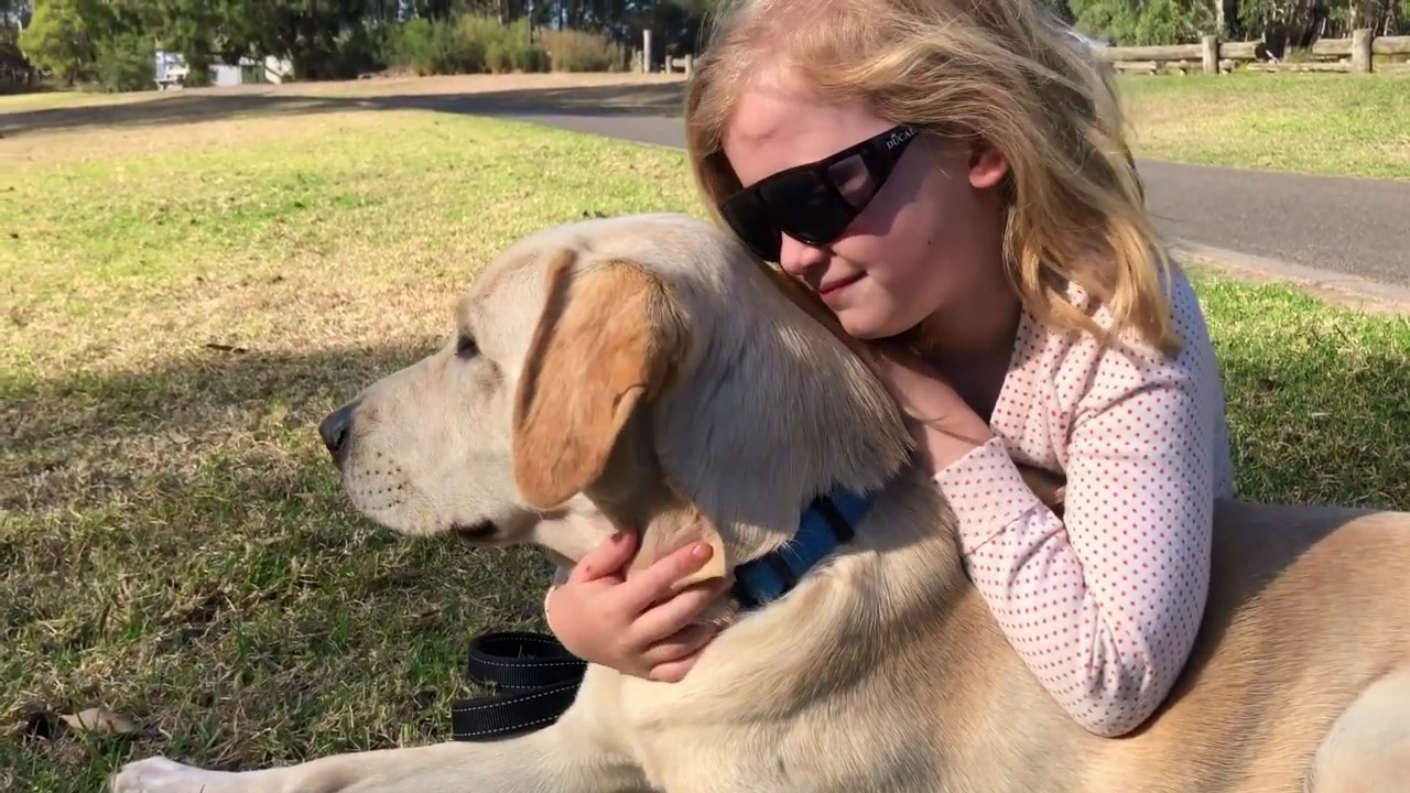 Current appeal - Guide Dogs Victoria
