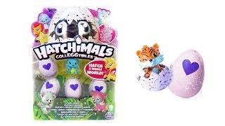HATCHIMALS ЯЙЦА СЮРПРИЗЫ с игрушками ХЕТЧИМАЛС Коллекционные фигурки зверушки Surprise eggs unboxing