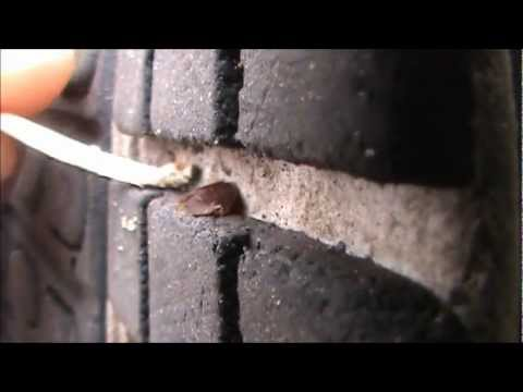 how to clean bed bugs from shoes
