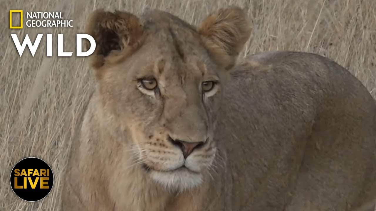 Safari Live - Day 374 | Nat Geo Wild