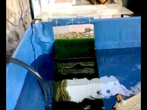 tartarughe d 39 acqua dolce youtube