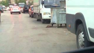 Ezilen kedi Zavallı Kedi arabanın altında ezilerek Can çekişiyor (+18)
