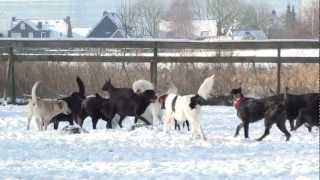 Hus Zaanstreek: A Happy Dog Is A Pack Dog!