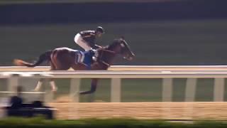 Vidéo de la course PMU AZIZI SAMIA