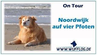 Noordwijk auf vier Pfoten // Niederlande // Holland