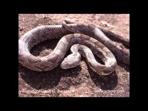 Một số hình ảnh về con rắn
