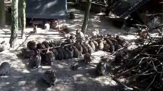 dziki królik w zagrodzie