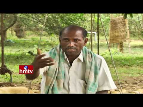 Ideal Farmers Earn High Profits From Seasonal Crops Cultivation | Nela Talli | HMTV