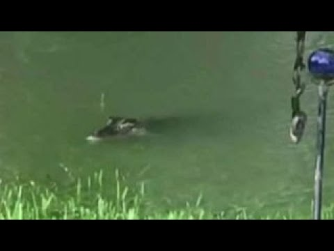 Texas woman films alligators swimming in back yard