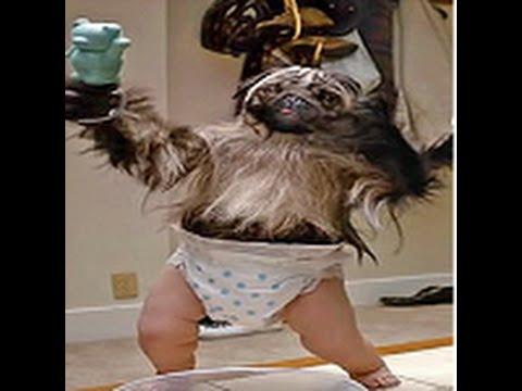 Puppy Monkey Baby Wallpaper - WallpaperSafari