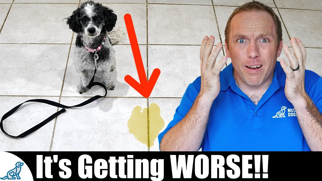 The BIGGEST Mistake People Make With Puppy House Training