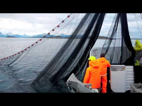 Makrell Fiske 2012