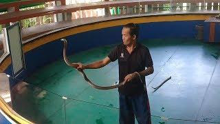 Экскурсии Тайланда на острове Пхукет Что посмотреть в Тайланде выбор экскурсии  Шоу со змеями