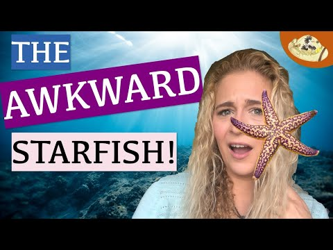 What Are Some Facts About Sea Stars? Why Are Starfish NOT Fish?