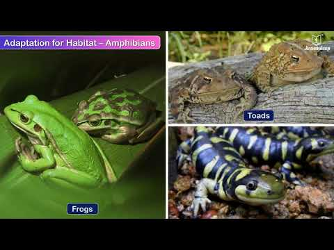 Adaptation In Animals | Science Video For Kids | Periwinkle