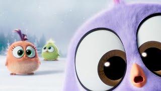 ANGRY BIRDS : le Film - Ils sont trooooop mignoooo...