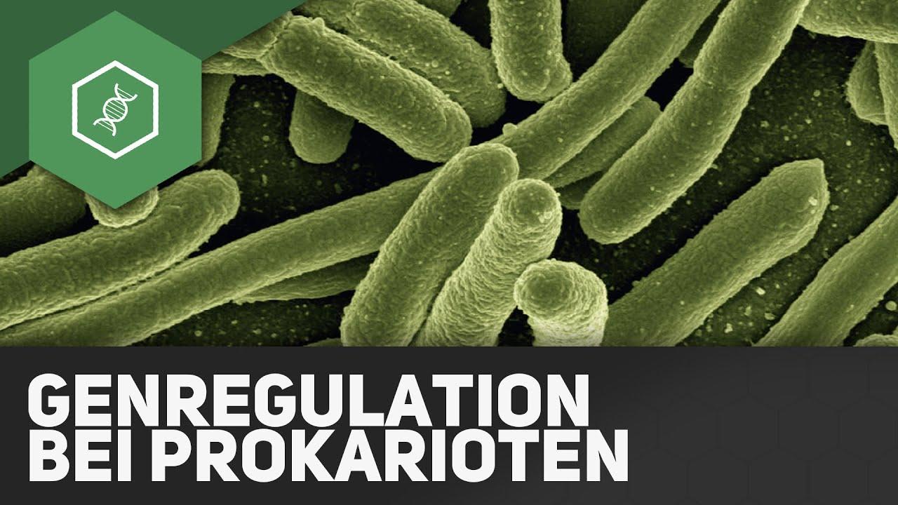 Genregulation bei Prokaryoten - Operon-Modell ○ Gehe auf SIMPLECLUB ...