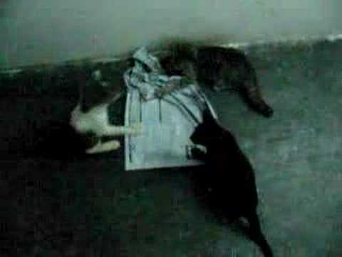 cat love newspaper 3