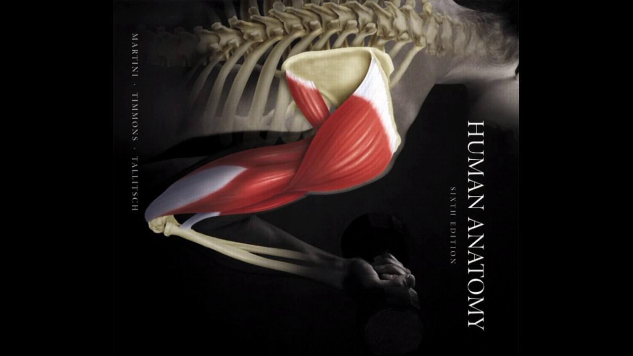 Descargar Libro de Anatomía Humana de-Martini, Timmons y Tallitsch ...