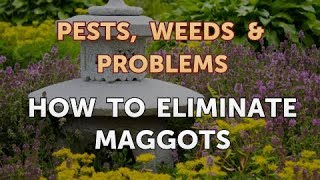 How to Eliminate Maggots