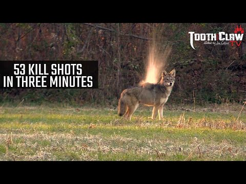 53 Kill Shots In 3 Minutes – Coyote Hunting