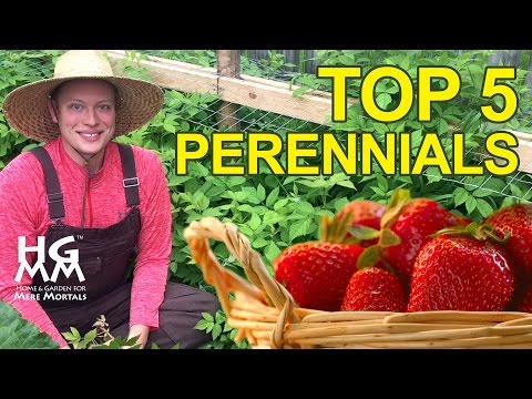 Top 5 Perennials for Your Garden