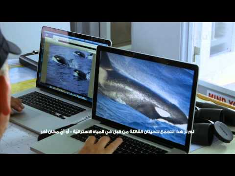 فيلم وثائقي : البحث عن أكثر كائنات المحيط افتراساً
