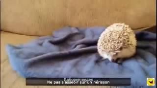 короткие смешные ролики про животных short funny videos about animals # 15
