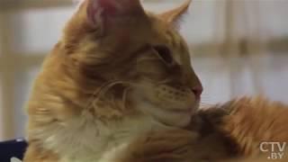 Глазастые, пушисты и лысые: кошки – как лучший источник избавления от переутомления и стресса