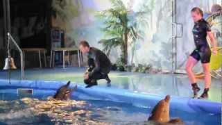 Ночное шоу с дельфинами - прыжки