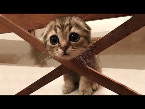 Aww So Cute and Funny Cats 2020