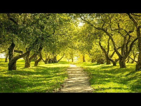 Instrumental Music for Studying and Concentration, Binaural Beats, Music Study, Relax Music, ☯3212