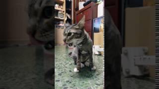 cat 拍貓影片by HTC u11 4K VIDEO