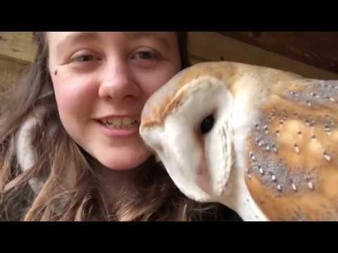 Meet Billie - Barn Owl (Tyto Alba) Apollo Falconry