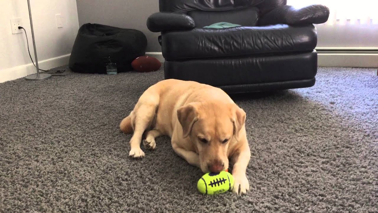 Best Toys for Dogs who Like to Chew I m not kidding one