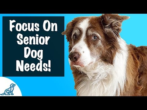 How To Care For A Senior Dog - For Dogs 8+ Years Old - Professional Dog Training Tips