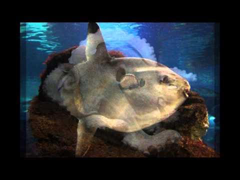 Aquarium in/at Barcelona