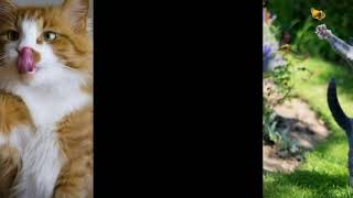 Cуперские кошки   кошки видеоролик