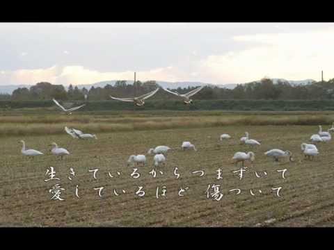 白鳥の歌が聴こえますか (武山あきよ)V.02