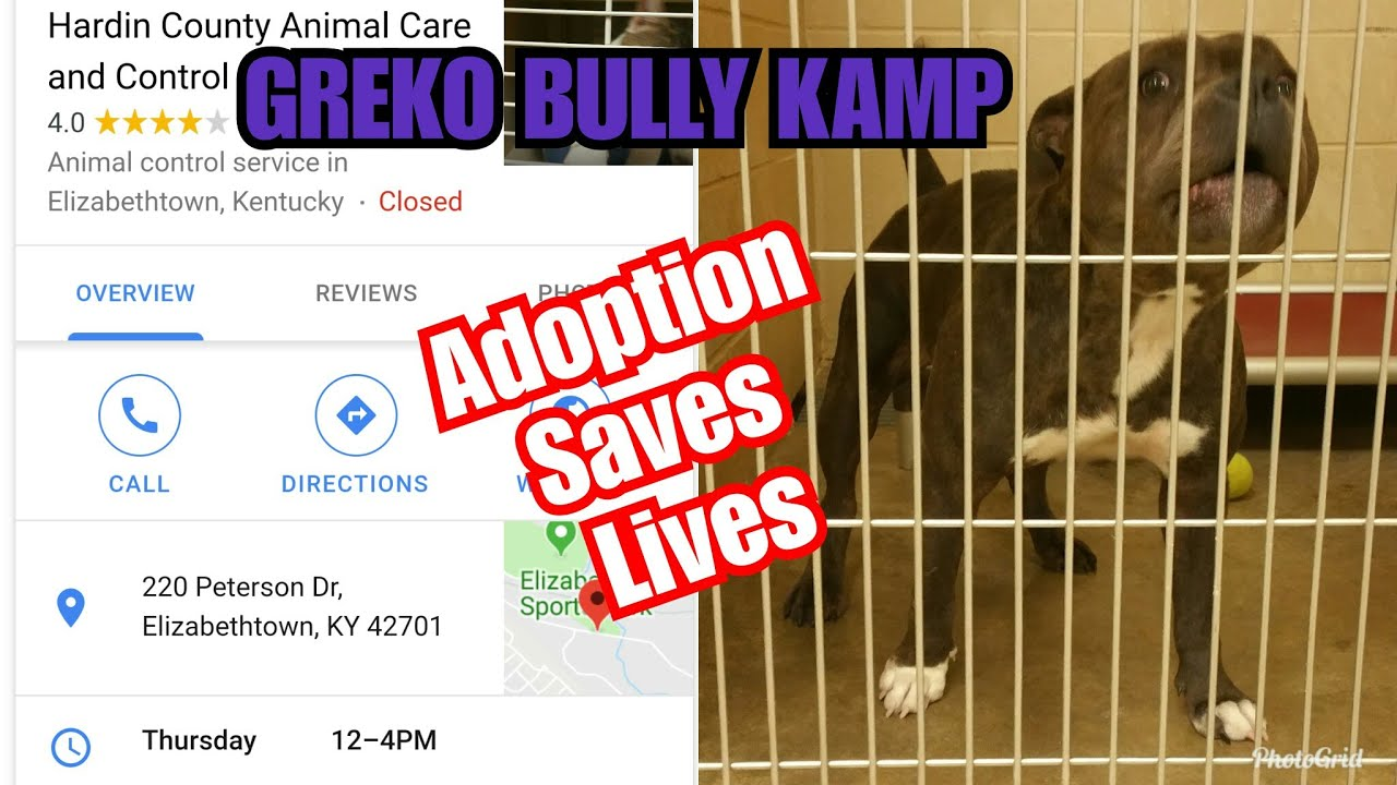 Adoption saves lives dog shelter dog pound do pounds dog lives matter black  dog lives matter