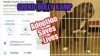 Adoption saves lives dog shelter dog pound do pounds dog lives matter black dog lives matter