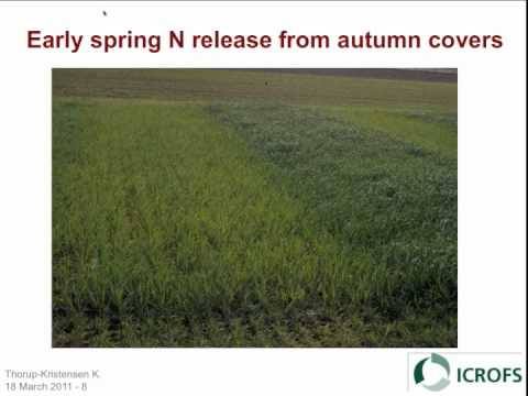 Organic Cropping Systems for Vegetable Production: Crop Nutr